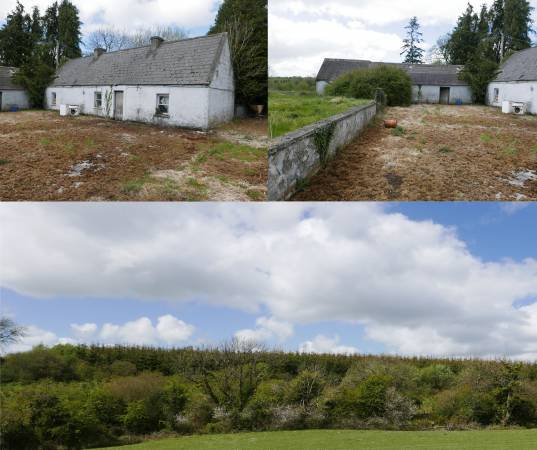 Commercial Forestry Plantation & Derelict Cottage with Outsheds