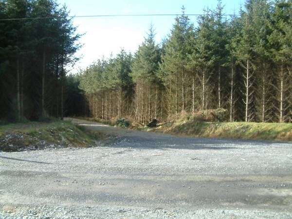 76 Acres of Forestry