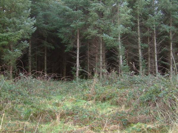 16.9 Acres of Forestry
