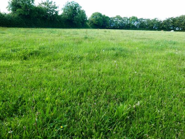 Approx. 1 Acre Site For Sale